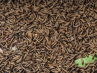 Worms in animal market..Worms in animal market