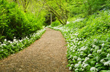 Path through Wild Garlic
