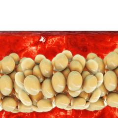 Fat cells - 3D Render