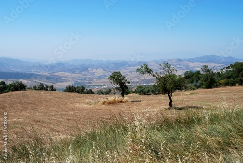 Wheat fields near Almogia, Andalusia © Arena Photo UK