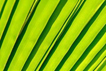 Detail of the palm leaf