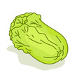 Lettuce cartoon isolated illustration