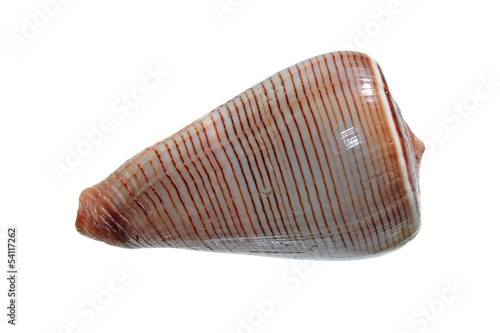 Shell of Conus figulinus isolated on white