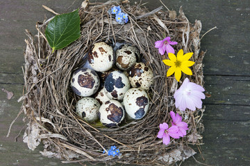 nest with eggs - easter still life