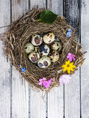 a little nest with eggs on a wooden table - easter still life