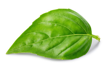 Leaf of basil