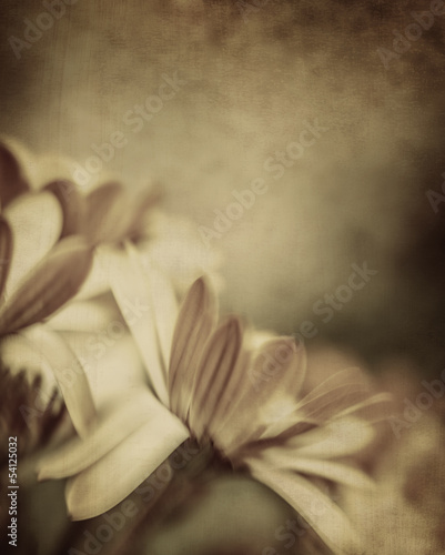 Grunge photo of daisy flowers © Anna Om
