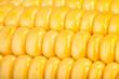 corn kernels macro