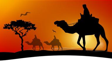 Wüste Safari Kamele