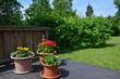 Flowerpots in garden