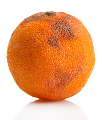 Rotten orange isolated on white