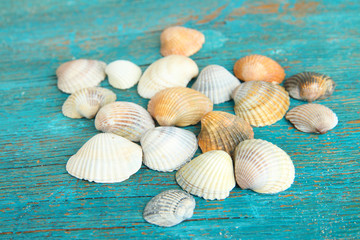 Sea seashells on blue wooden table close-up