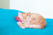 Young Cat With Red Pillow