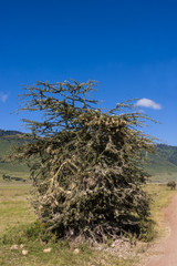 Unique Bush On The Side Of The Road In Tanzania