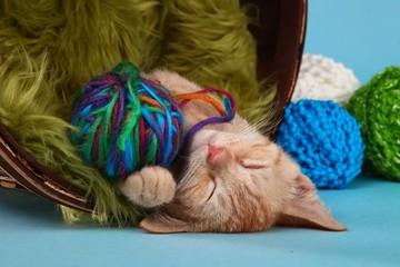 Little Orange Tabby Kitten in Studio