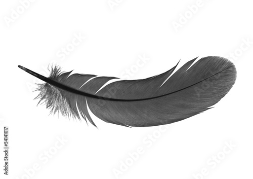 Tuinposter Zwaan feather on a white background