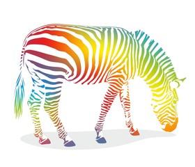 zebra1207a