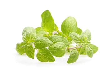 Oregano on white background