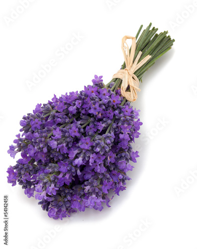 Foto op Canvas Lilac bunch of lavender isolated on white