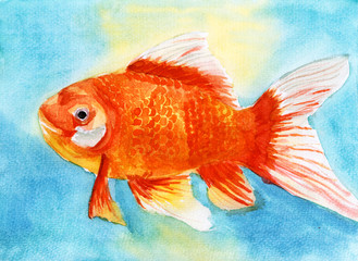 swim goldfish watercolor