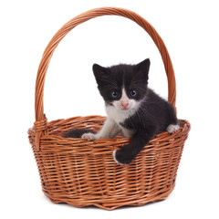 Small black kitten in a wicker basket isolated on white