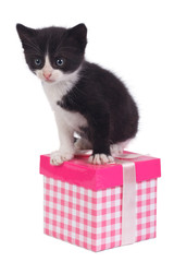Little black kitten and gift box isolated on white background