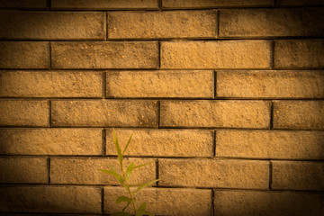 Facing brick background with green shoot