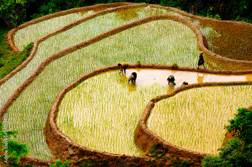 obraz lub plakat Pola ryżowe z szeregowej w Wietnamie