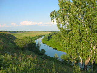 Summer landscape with a birch and small river