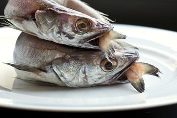 Merluchon, poisson, pêche, animal, frais, fraîcheur, cru