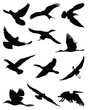 Silhouettes of birds in flight-vector illustration