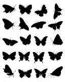 Black silhouettes of butterflies-vector