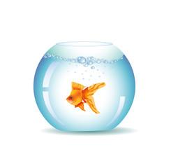 Golden Fish In Aquarium, Isolated On White