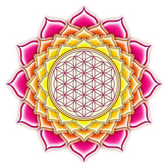 Blume des Lebens Lotus