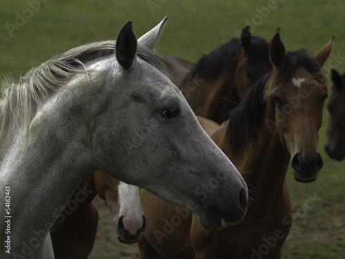 pferd34