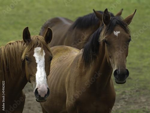 pferd 21