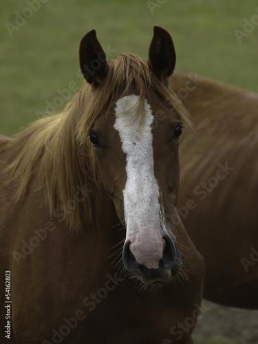 pferd30