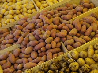 kartoffelsorten auf dem markt