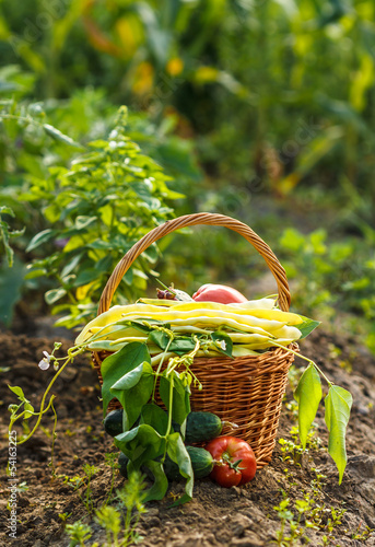 A harvest of season vegetables in a wicker basket