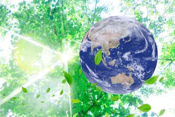 葉っぱと地球