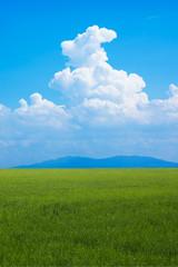草原と青空と夏雲