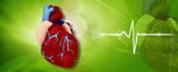 Digital illustration of human heart in medical background.