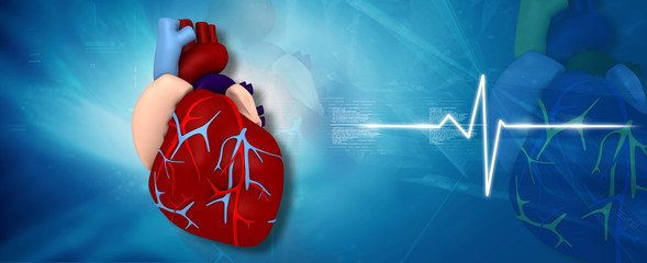 Digital illustration of human heart in medical background