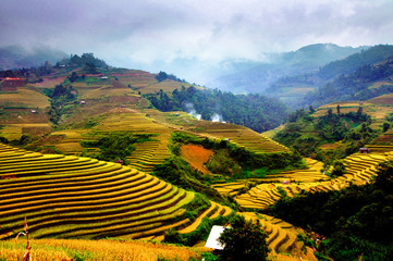 Rice fields of terraced in Vietnam