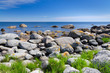 Summer Swedish coast in sunny day