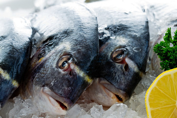 Seafood, fish - fresh sea dorada in ice, healthy food