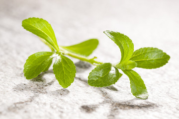 Stevia, sugarleaf isoalted.