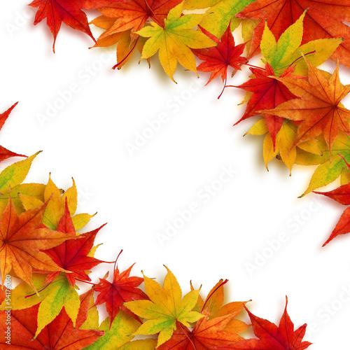 紅葉 もみじ 秋 フレーム