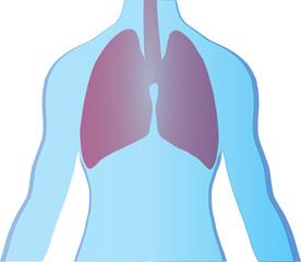 Medizin Wallpaper Mann Lunge Thorax