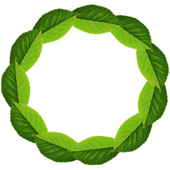 Circle frame of green leaves
